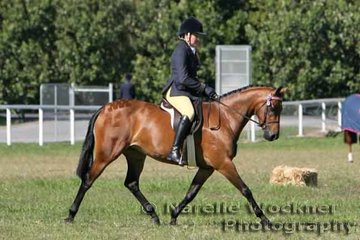 'Kolbeach Emerald' ridden by Zoe Topcov working out to place 2nd in the Galloway over 14hh n/e 14.2hh