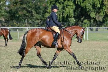'CP X-Rated' ridden by Susan Paine working out to win the Champion Galloway Hack 2007