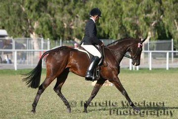 Working out to win Reserve Champion Large Hack 2007 'Acoustic' ridden by Paul Austin