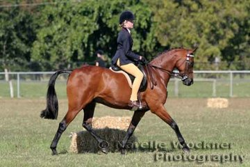 'Warriewood Monarch' ridden by Tyler Harris working out to place 2nd in the Galloway over 14.2hh n/e 15hh