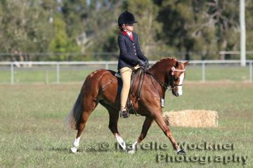 'El'Ray Showpiece' ridden by Brooke Langbecker working out to win Reserve Champion Amateur Owner Rider Small Pony 2007