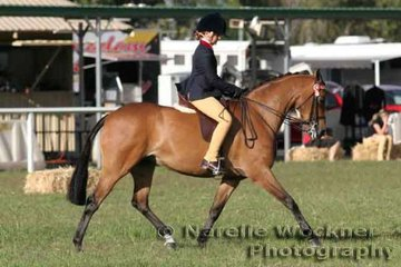 Brooke Langbecker riding 'Warriewood Duplicate' to successfully win Champion Amateur Owner Rider Large Pony 2007