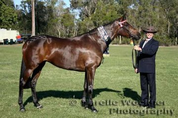 Winner of Led Youngstock 4 years and Under over 14.2hh 'Classical' exhibited by Gary Weir