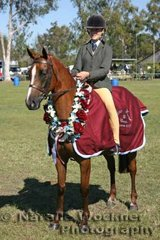 'Oaklands Park Lucky Charm' exhibited by David and Kathy Chirio won Champion Ridden Newcomer Large Hunter Pony Of The Year