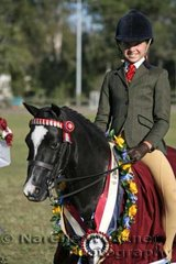 'Mirawood Tarchon' won Champion Owner Rider Small Pony Of The Year ridden by Amylee Holborn-Quirk