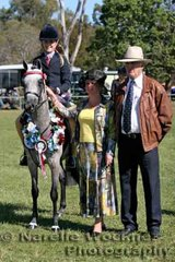 Champion Ridden Newcomer Small Pony of the Year 2007 'Whitmere Royal Ballet' exhibited by Adam Oliver and ridden by Courtney Rabjones with NSW judges Dianne Godfrey from Kurrajong and Allan Martin from Tamworth