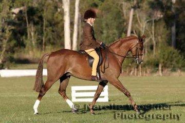 Reserve Champion Owner Rider Large Hunter Pony over 12.2 hh ne 14.0hh 'Callista Jet Stream' ridden by Anna-Lee Mair