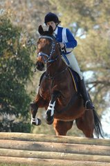 Joanna Bailey and 'Balmy Boy' look full of running for the Mansfield Pony Club in the Grade 3 competition.