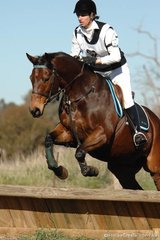 Alison Hall and 'Beau Valor' from Seymour demomstrate the form that saw them take out the Grade 4 Open competition.