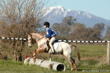 Alice Debney and 'Turbo' took second place in the Grade 5A competition for Mansfield Pony Club.