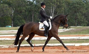 Fairbanks Whitney & Shane Davidson stride it out in the Medium 4.2  at the Great South East Dressage Championships.