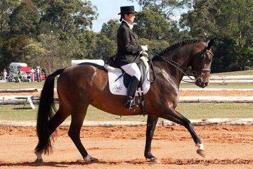 Blanco Park Waltstar & Katherine Bletchen were competitors in the Medium 4.2.
