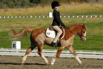 Kelsey Szczepanik rode the smallest mount of the weekend, the Welsh mare Abergowrie Cherry who at only 11.2hh  put her best foot forward in the Equissentials Pony Novice 2.3.