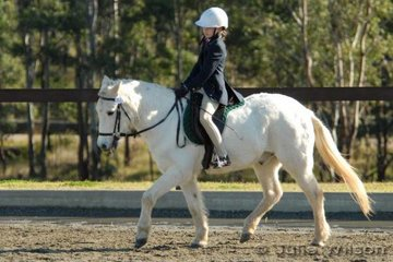 Eleven year old Imogen Leaning warms up her very experienced 22 year old Jellimbra Star (Bubbles) for the Novice EFA 2.3 NSW State Pony Dressage Championships.