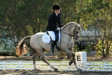 Maddi Colquhoun and Congarinni  Vanessa O'Donnell rode her Welsh pony, Golden Boy to first place in the NSW State Pony Championships Novice Freestyle.