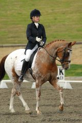 Alexis Hellyer and Colonials Pure magic competed in the Horze Australia Medium 4.4.