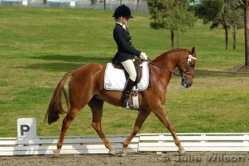 Sarah North rode Royalwood Gift by Syon Royal Portrait in the NSW State Dressage Championships Preliminary 1.4.