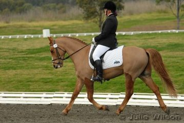 Alison Cox rode Tayco Sir Dynamo in the NSW State Pony Dressage Championships Elementary EFA 3.4.
