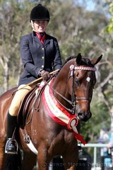 Reserve Champion Hack went to Celebrity Class ridden by Crystal Mort