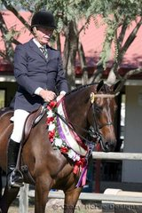 Champion Led & Ridden Hack was the beautiful Classical ridden by one very happy Gary Weir