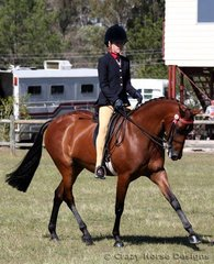 The striking bay Janevlyn Madonna ridden by Annalee Mair was 4th place in Ridden Galloway