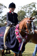 Champion Small Ridden Pony was Elray Show Piece ridden by Brooke Langbecker