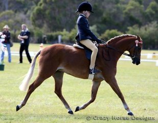 Reserve Champion in Small Ridden Pony was Langtree Evening Star ridden by Lachlan Edwards