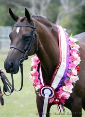 Champion Show Hunter Pony was Helden Park Etchings owned by Courtney Rabjones