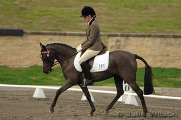 Kristen Bailey rode one of the smallest mounts, Bannon Park Miss Ellegant in the dressage section of the Newcomers for a score of 68.7.
