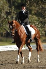 Judy Clarke rode the good looking Diablito to win the Preliminary Division 2 on a score of 42.