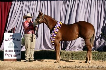 Grand Champion Open & Amateur Owner Stallion/Colt was the awesome Veloci Te shown with Karen 'Grandma' Daley, his very proud owner!