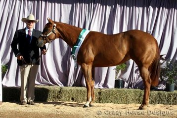 Got To Love Me was Reserve Grand Champion Amateur Owner Mare Exhibit shown by Ralph Odell