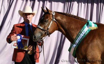 Reserve Grand American Mare Seekquence shown by Reece Burchell