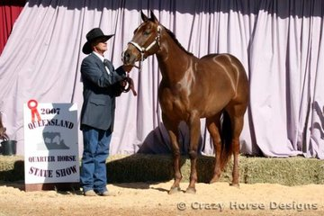 Reserve State Champions in Amateur Owner Gelding 2 Years was Wallaroi Obviously A Hunk shown by Ken Church