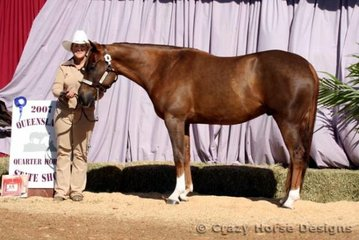 Wobbly Boot Scoot shown by owner Nan Brayshaw were State Champions in Amateur Owner Gelding 2 Years