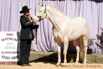 State Champion 3 Year Old Colt was Nights Of Gold shown by Leanne Owens