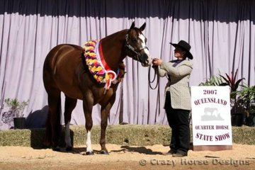 Grand Champion Open Halter Mare, was Wadayarekon Shes Magic, shown by her trainer, one very proud Samantha Daley. This was this mares last show, after having an awesome career, she is now destined to the broodmare paddock.