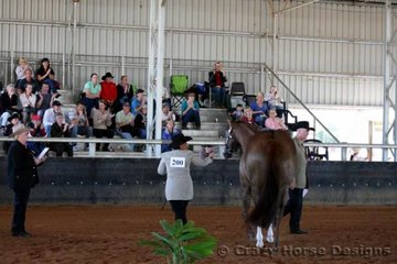 And the crowd cheered- Wadayarekon Shes Magic is called out as Grand Champion Mare at the 2007 QLD Quarter Horse State Show, an award she has won 3 times previously