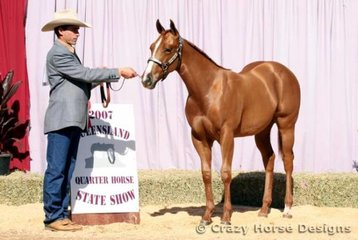 The AQHA Raffle gelding & reserve champion open weanling gelding was Rightchester Cross Dress, he was shown by David Wright