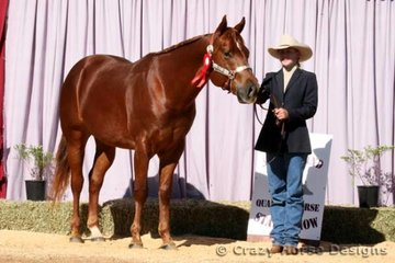 Reserve State Champions in Colt 3 Years was Heza Struttin Tradition shown by Lisa Jane Hall