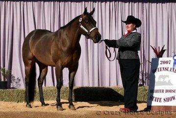 State Champion Amateur Owner & AmQHA Amateur Owner Showmanship was Lesley Stewart & Cee A Little Twist