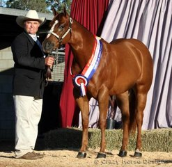 Reserve Grand Champion Mare & Grand Champion AmQHA Mare Exhibit was the lovely Temonee* filly Got To Envy Me, shown by Rod Duddy