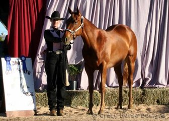 State Champion in Yearling Lungeline, Yearling Led Trail & Amateur Owner Yearling Gelding was PQH Macho Hillbilly shown by Leesa Petfield