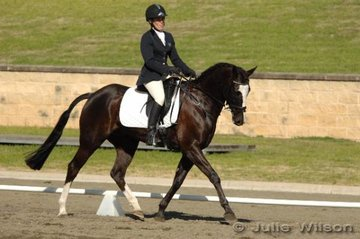 During the week Niki Chapman started Milford Monarch in the Preliminary section, on the weekend they stepped up a grade to compete in the Pre-Novice Division 1.