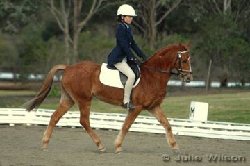 Stephanie Collins looks very serious riding Raleigh Prestige in the Newcomers dressage.