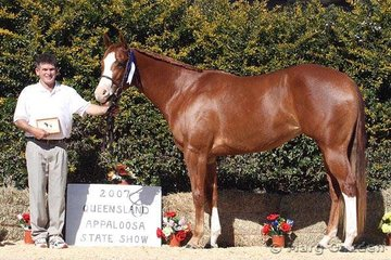 William Melvin showed J Lo-T to the championship in the Amateur Hunter In Hand.