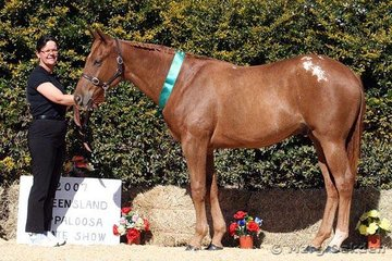 Arnys Moonlight Prince & Carol Olsen placed fourth in the Amateur Hunter In Hand.