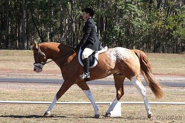 The Amateur Preliminary Dressage reserve champions were Cayuse Mighty Outrageous & Lee Garland.