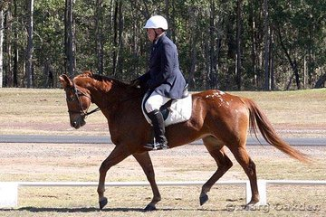 Jazzible & Vince McAuliffe competing in the Open Preliminary Dressage.