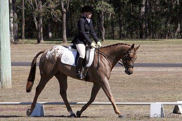 Arnys Lucky Shot & Kate Farmer competing in the Open Preliminary Dressage.